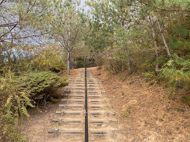 太古の森への道