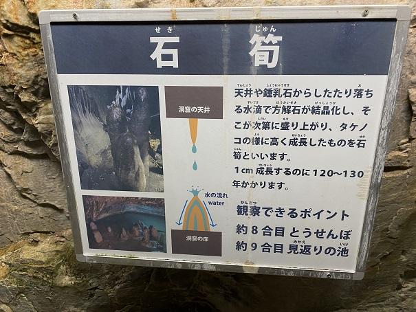 井倉洞 石筍