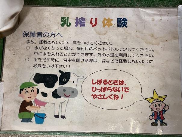 牛の館 乳しぼり体験説明