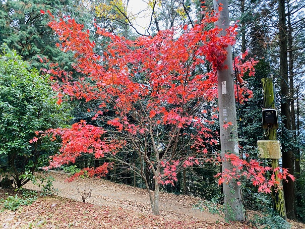雲海展望公園 紅葉1