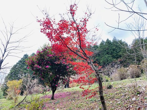 雲海展望公園 紅葉2