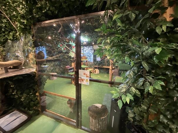 倉敷どうぶつの森 ヒョウ猫の扉