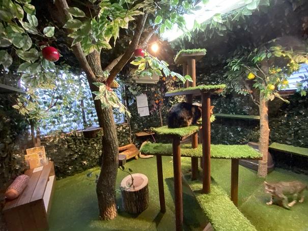倉敷どうぶつの森 ヒョウ猫の部屋