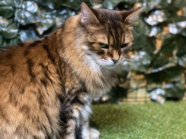 倉敷どうぶつの森 ヒョウ猫1