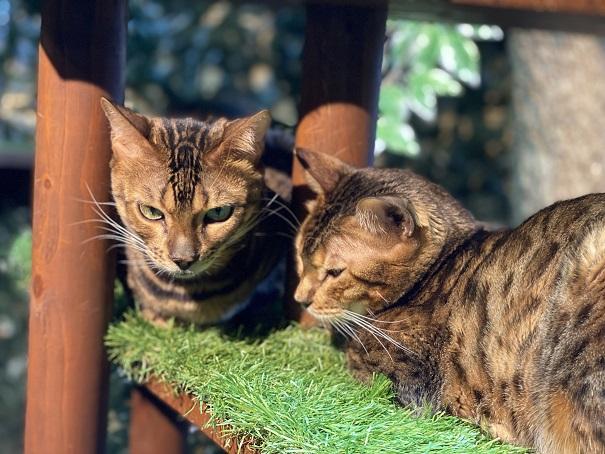 倉敷どうぶつの森 ヒョウ猫3
