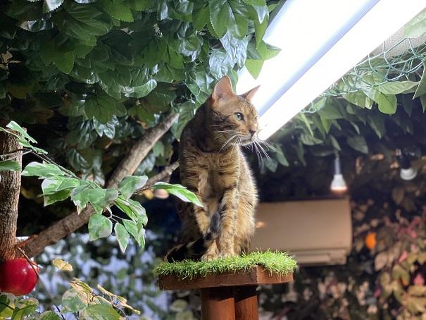 倉敷どうぶつの森 ヒョウ猫6
