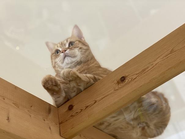美観NEKO キャットウォークの猫