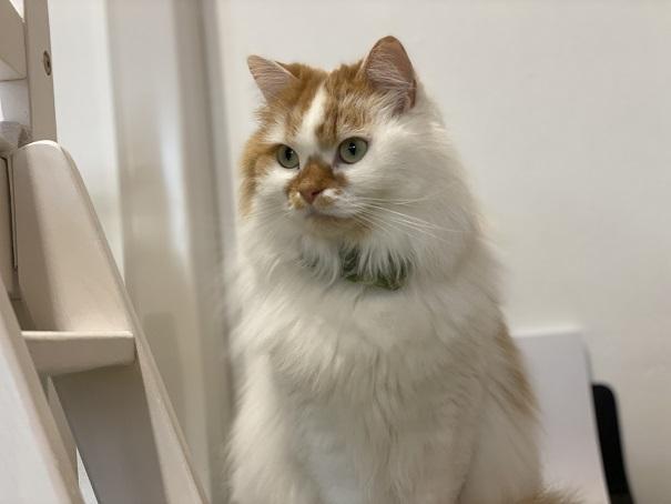 美観NEKO お座りする猫