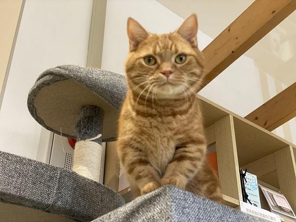 美観NEKO タワーの猫
