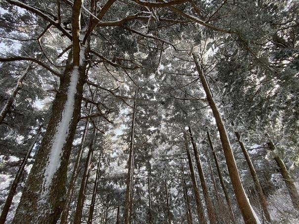 石鎚神社道中 雪の木々