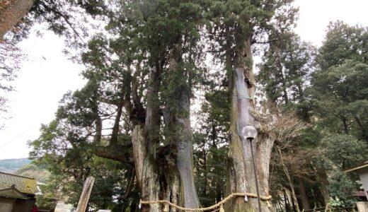 杉の大杉 樹齢3000年日本一の大杉 美空ひばり成功祈願の地 大豊町