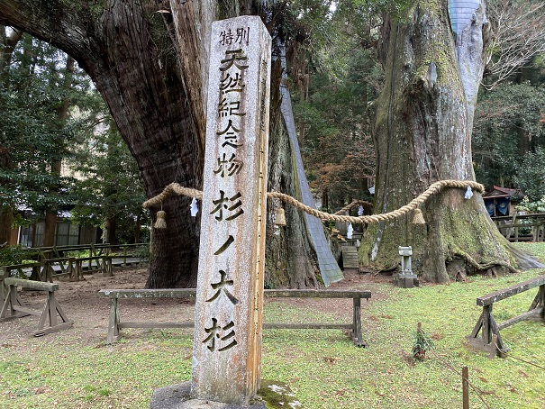 天然記念物 杉の大杉