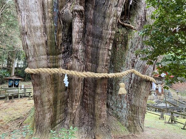 杉の大杉 幹