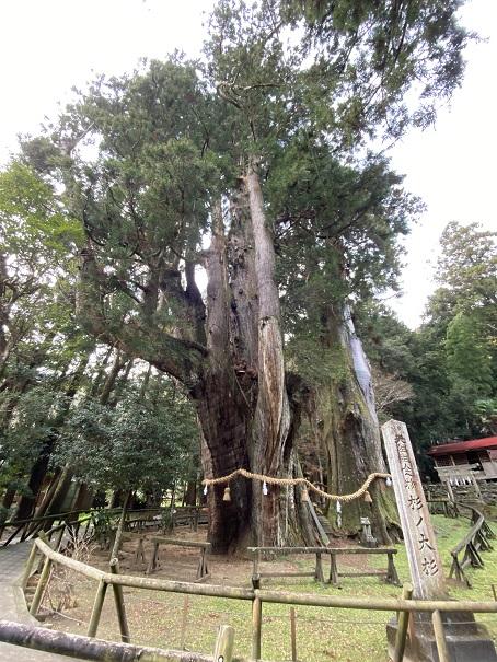 国の天然記念物 杉の大杉