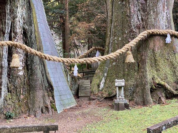 杉の大杉 2つの幹