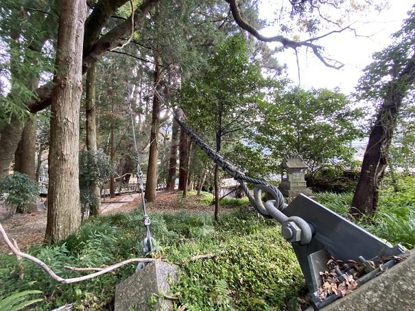 杉の大杉 ワイヤー