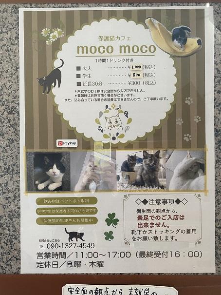 保護猫カフェmoco moco案内