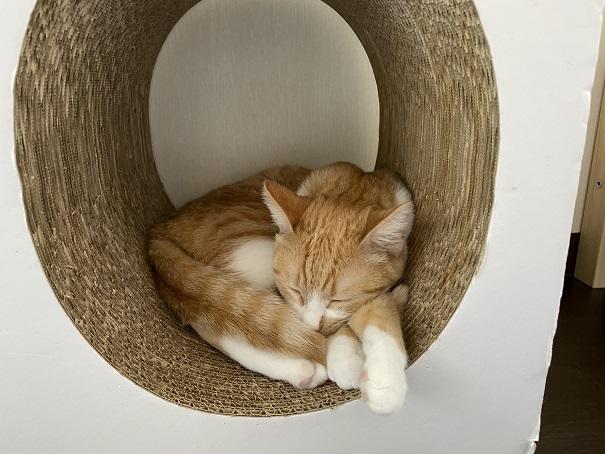 保護猫カフェmoco moco 猫1