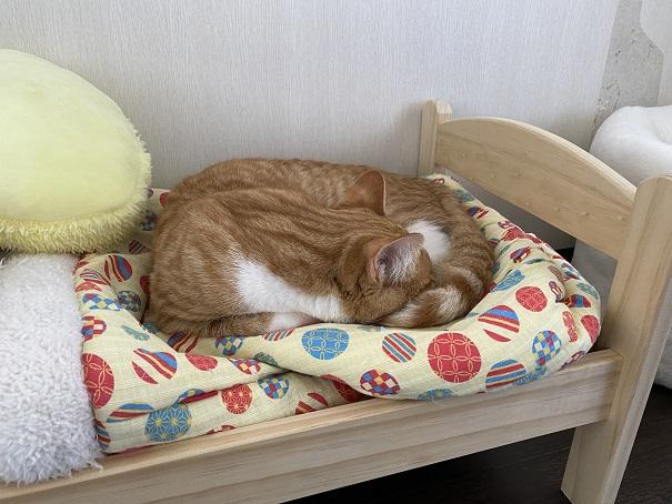 保護猫カフェmoco mocoこんぺいくん