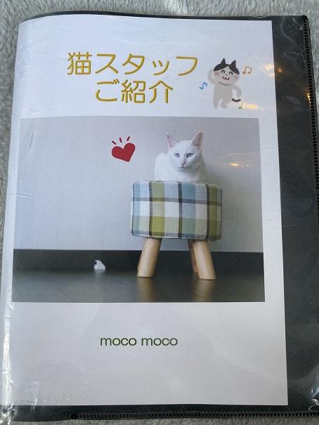 保護猫カフェmoco moco猫スタッフ