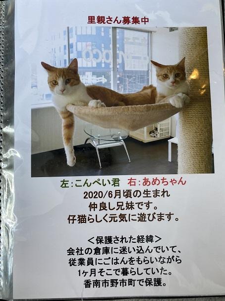 保護猫カフェmocomocoスタッフ1