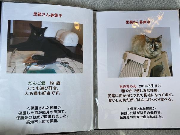 保護猫カフェmocomocoスタッフ2