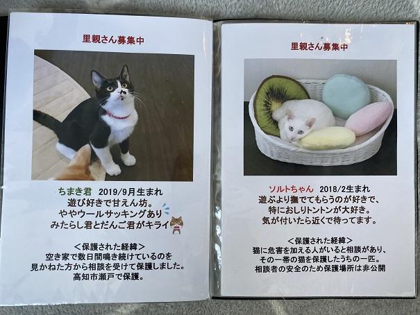保護猫カフェmocomocoスタッフ3