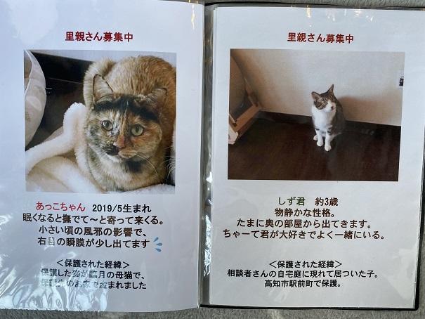保護猫カフェmocomocoスタッフ4