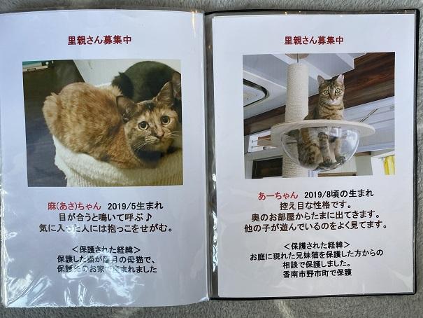保護猫カフェmocomocoスタッフ5