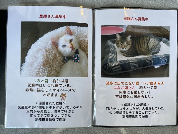 保護猫カフェmocomocoスタッフ6
