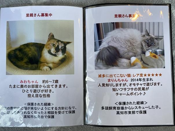 保護猫カフェmocomocoスタッフ7