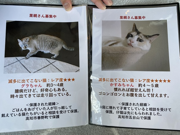保護猫カフェmocomocoスタッフ8