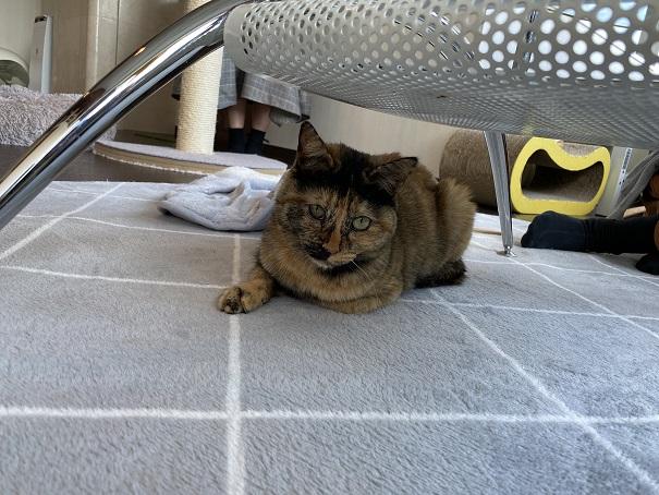 保護猫カフェmoco moco 猫7