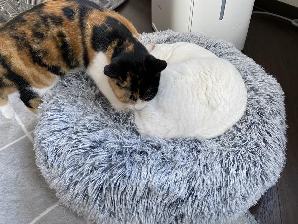 保護猫カフェmoco moco仲良し猫