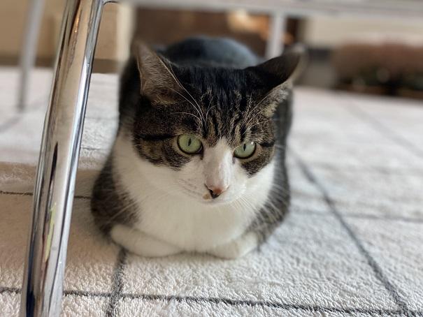 保護猫カフェmoco moco猫8