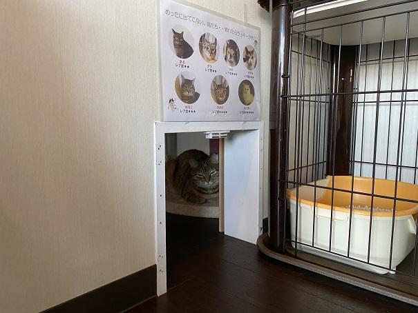 保護猫カフェmoco moco 猫の出入り口