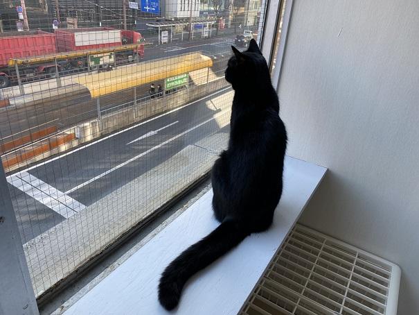 保護ネコカフェmoco moco 外を見る猫