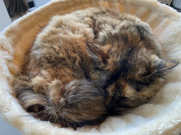 保護猫カフェmoco moco猫2