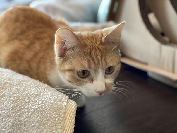 保護猫カフェmoco moco