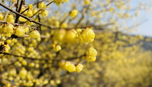 まんさくとろう梅の里 一年中花を楽しめる喫茶店 観音寺市