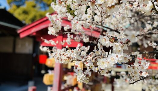 滝宮天満宮 梅の花の名所 赤 白 ピンク色と鮮やか 綾川町