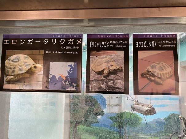 愛媛県立とべ動物園 リクガメ案内