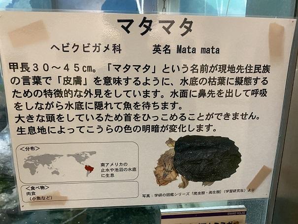 愛媛県立とべ動物園 マタマタ案内