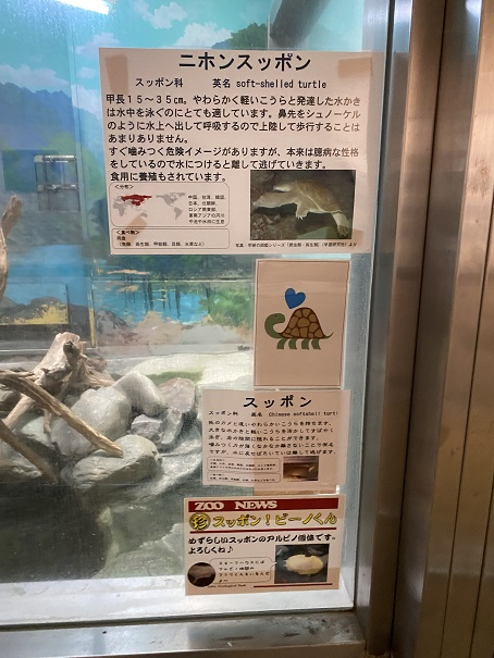 愛媛県立とべ動物園 ニホンスッポン案内