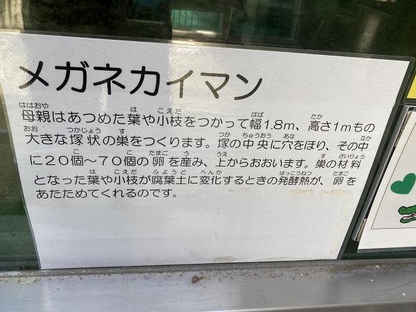 愛媛県立とべ動物園 メガネカイマン案内