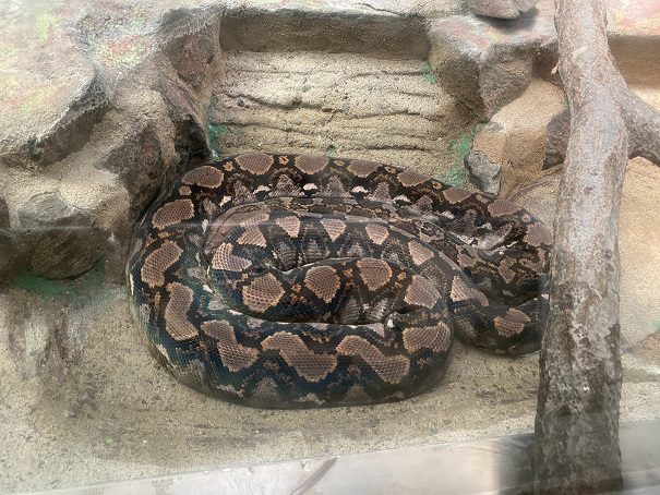 愛媛県立とべ動物園 ニシキヘビ