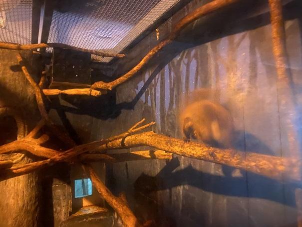 愛媛県立とべ動物園 ムササビ