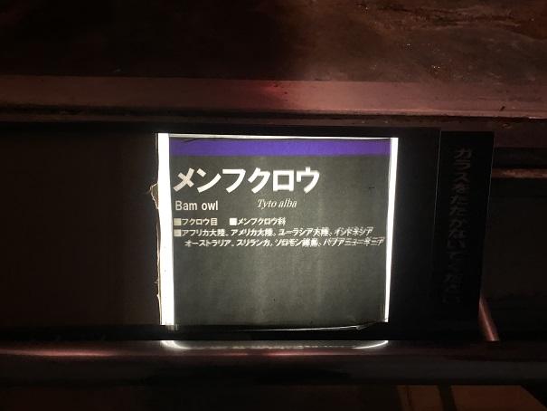 愛媛県立とべ動物園 メンフクロウ案内