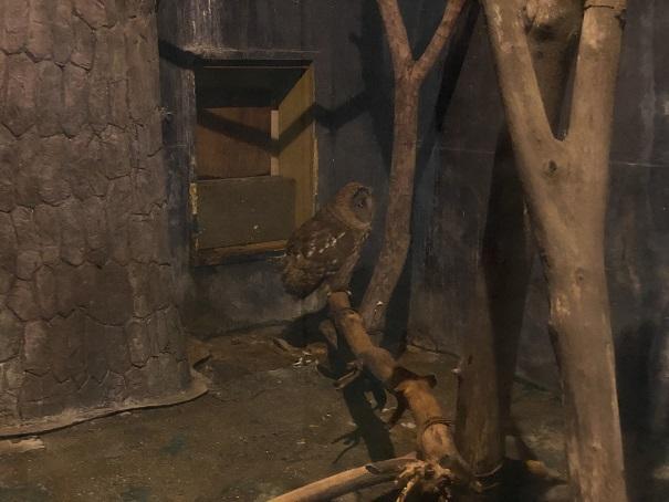 愛媛県立とべ動物園 フクロウ