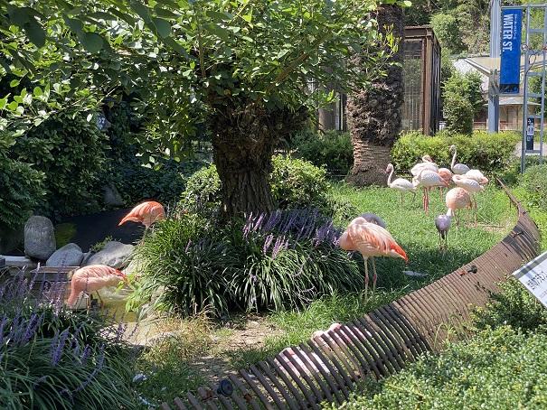 愛媛県立とべ動物園 フラミンゴ